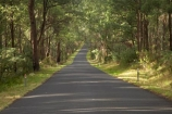 Alpine-Way;Australia;avenue;driving;eucalypt;eucalypts;eucalyptus;eucalytis;gum;gum-tree;gum-trees;gums;highway;highways;Kosciuszko-N.P.;Kosciuszko-National-Park;Kosciuszko-NP;N.S.W.;New-South-Wales;NSW;open-road;open-roads;road;road-trip;roads;Snowy-Mountains;Snowy-Mountains-Drive;South-New-South-Wales;Southern-New-South-Wales;straight;transport;transportation;travel;traveling;travelling;tree;trees;trip