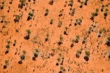 aerial;aerial-photo;aerial-photography;aerial-photos;aerial-view;aerial-views;aerials;Allocasuarina-decaisneana;arid;Australasia;Australia;Australian;Australian-Desert;Australian-Deserts;Desert;Desert-Oak;Desert-Oaks;Deserts;Kurkara;N.T.;National-Park;National-Parks;Northern-Territory;NT;orange-sand;Outback;red;red-centre;red-sand;sand;sandy;Uluru;Uluru-_-Kata-Tjuta-National-Park;Uluru-_-Kata-Tjuta-World-Heritage-Area;Uluru_Kata-Tjuta;UNESCO;Unesco-world-heritage-area;World-Heritage-Area;World-Heritage-Areas