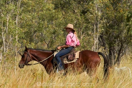 akubra;Australasia;Australia;Australian;Australian-Outback;back-country;backcountry;cattle-muster;cattle-mustering;cowgirl;cowgirls;horse;horseback;horses;muster;mustering;musters;N.T.;Northern-Territory;NT;Outback;Top-End;Victoria-Highway