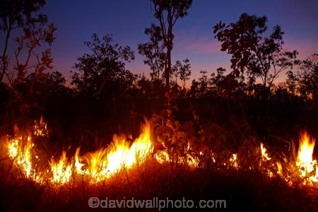 alight;Australasia;Australia;burn;burned;burning;burnoff;burnoffs;burns;burnt;bush-fire;bush-fires;danger;dangerous;destruction;dusk;evening;fire;fires;flamable;flame;flames;flaming;grass-fire;grass-fires;heat;hot;Litchfield-N.P.;Litchfield-National-Park;Litchfield-NP;N.T.;night;night-time;Northern-Territory;NT;on-fire;orange;Top-End;twilight;wild-fire;wild-fires;wildfire;wildfires