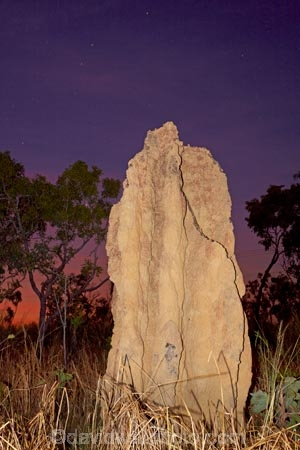 ant-hill;ant-hills;anthill;anthills;Australasia;Australia;Cathedral-mounds;Cathedral-Termite-mounds;dusk;evening;N.T.;nightfall;Northern-Territory;NT;orange;sky;star;stars;sunset;sunsets;termitaria;termite-colonies;termite-colony;termite-hill;termite-hills;termite-mound;termite-mounds;termite-nest;termite-nests;Top-End;twilight