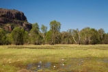 Anbangbang;Anbangbang-Billabong;Anbangbang-wetlands;Australia;Australian;billabong;billabongs;Burrunggui;flood-plain;flood-plains;floodplain;floodplains;Gagadju;Kakadu;Kakadu-billabong;Kakadu-billabongs;Kakadu-flood-plain;Kakadu-flood-plains;Kakadu-floodplain;Kakadu-floodplains;Kakadu-N.P.;Kakadu-National-Park;Kakadu-NP;Kakadu-wetland;Kakadu-wetlands;N.T.;Northern-Territory;NT;swamp;Top-End;UN-world-heritage-area;UN-world-heritage-site;UNESCO-World-Heritage-area;UNESCO-World-Heritage-Site;united-nations-world-heritage-area;united-nations-world-heritage-site;wetland;wetlands;world-heritage;world-heritage-area;world-heritage-areas;World-Heritage-Park;World-Heritage-site;World-Heritage-Sites