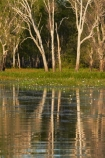 Australia;Australian;billabong;billabongs;calm;flood-plain;flood-plains;floodplain;floodplains;Gagadju;Gagudju-Dreaming;Kakadu;Kakadu-billabong;Kakadu-billabongs;Kakadu-flood-plain;Kakadu-flood-plains;Kakadu-floodplain;Kakadu-floodplains;Kakadu-N.P.;Kakadu-National-Park;Kakadu-NP;Kakadu-wetland;Kakadu-wetlands;N.T.;national-parks;Northern-Territory;NT;placid;quiet;reflection;reflections;serene;smooth;still;Top-End;tranquil;tree;trees;UN-world-heritage-area;UN-world-heritage-site;UNESCO-World-Heritage-area;UNESCO-World-Heritage-Site;united-nations-world-heritage-area;united-nations-world-heritage-site;water;wetland;wetlands;wilderness;wilderness-area;wilderness-areas;world-heritage;world-heritage-area;world-heritage-areas;World-Heritage-Park;World-Heritage-site;World-Heritage-Sites;Yellow-Water;Yellow-Water-Billabong;Yellow-Water-Wetland;Yellow-Water-Wetlands