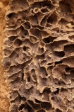 ant-hill;ant-hills;anthill;anthills;Australia;Australian;Cathedral-mounds;Cathedral-Termite-mounds;close_up;detail;Gagadju;inside;Kakadu;Kakadu-N.P.;Kakadu-National-Park;Kakadu-NP;N.T.;Northern-Territory;NT;termitaria;termite-colonies;termite-colony;termite-hill;termite-hills;termite-mound;termite-mounds;termite-nest;termite-nests;Top-End;UN-world-heritage-area;UN-world-heritage-site;UNESCO-World-Heritage-area;UNESCO-World-Heritage-Site;united-nations-world-heritage-area;united-nations-world-heritage-site;world-heritage;world-heritage-area;world-heritage-areas;World-Heritage-Park;World-Heritage-site;World-Heritage-Sites