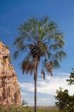 Australasia;Australia;bluff;bluffs;cliff;cliffs;Katherine;Katherine-Gorge;Katherine-Gorge-National-Park;N.T.;national-park;national-parks;Nitmiluk-N.P.;Nitmiluk-National-Park;Nitmiluk-NP;Northern-Territory;NT;palm;palm-tree;palm-trees;palms;Top-End