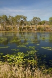 Adelaide-River;Australasia;Australia;dam;dams;lillies;lilly;lilly-pond;lilly-ponds;N.T.;Northern-Territory;NT;pond;ponds;reservoir;reservoirs;Top-End;water
