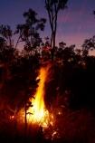 alight;Australasia;Australia;burn;burned;burning;burnoff;burnoffs;burns;burnt;bush-fire;bush-fires;danger;dangerous;destruction;dusk;evening;fire;fires;flamable;flame;flames;flaming;grass-fire;grass-fires;heat;hot;Litchfield-N.P.;Litchfield-National-Park;Litchfield-NP;N.T.;night;night-time;Northern-Territory;NT;on-fire;orange;Top-End;twilight;wild-fire;wild-fires;wildfire;wildfires