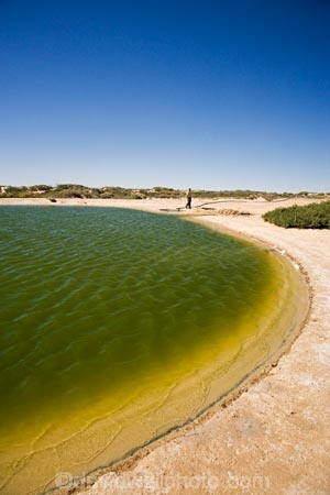 artesian-bore;artesian-bores;artesian-spring;artesian-springs;artesian-water;Australasia;Australia;Australian;Australian-Desert;Australian-Deserts;Australian-Outback;back-country;backcountry;backwoods;bore;bores;country;countryside;desert;Deserts;geographic;geography;Montecollina-Bore;mound-spring;mound-springs;natural-spring;natural-springs;oases;oasis;Outback;people;person;pond;ponds;red-centre;remote;remoteness;rural;S.A.;SA;South-Australia;spring;springs;Strezlecki-Track;Strezleki-Track;Strzelecki-Track;water;water-hole;water-holes;wilderness