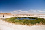 artesian-bore;artesian-bores;artesian-spring;artesian-springs;artesian-water;Australasia;Australasian;Australia;Australian;Australian-Desert;Australian-Deserts;Australian-Outback;back-country;backcountry;backwoods;Blanche-Cup-Mound-Spring;Blanches-Cup-Mound-Spring;bore;bores;country;countryside;desert;Deserts;geographic;geography;green;lush;mound-spring;mound-springs;natural-spring;natural-springs;oases;oasis;Oodnadatta-Track;Outback;people;person;pond;ponds;red-centre;remote;remoteness;rural;S.A.;SA;South-Australia;spring;springs;Wabma-Kadarbu-Conservation-Park;water;water-hole;water-holes;wilderness