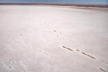 15-m-below-sea-level;aerial;aerial-photo;aerial-photography;aerial-photos;aerial-view;aerial-views;aerials;alkalii-flat;Australasian;Australia;Australian;Australian-Desert;Australian-Deserts;Australian-Outback;back-country;backcountry;backwoods;barren;barreness;basin;below-sea-level;Belt-Bay;bright;bright-white;dazzle;dazzling;depression;desert;deserts;desolate;dry;dry-lake;dry-lakes;empty;endorheric;endorheric-basin;endorheric-basins;endorheric-lake;extreme;flat;geographic;geography;glare;glary;hostile;huge;lake;lake-bed;lake-beds;Lake-Eyre-N.P.;Lake-Eyre-National-Park;Lake-Eyre-NP;lakes;national-park;national-parks;Oodnadatta-Track;Outback;pan;pans;playa;playas;remote;remoteness;S.A.;SA;sabkha;saline;salt;salt-crust;salt-lake;salt-lakes;salt-pan;salt-pans;salt-pattern;salt-patterns;salt_pan;salt_pans;saltpan;saltpans;salty;South-Australia;surface-pattern;surface-patterns;vast;white;white-surface;wilderness;worlds-largest-salt-lake