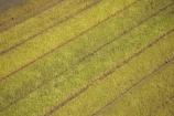 aerial;aerials;agricultural;agriculture;australasia;Australia;australian;crop;crops;farm;farming;farms;field;fields;pattern;patterns;Queensland;rural;sugar-cane;sugar_cane;Sugarcane;Sunshine-Coast;tropical