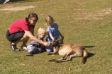animal;animals;aussie-zoo;australasia;Australia;australian;boy;boys;child;children;families;family;Feeding;girl;girls;kangaroo;kangaroos;little-girl;mammal;mammals;marsupial;marsupials;mother;mothers;Queensland;sunshine-coast;tame
