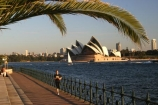 australia;sydney;cove;harbour;harbours;harbors;harbor;icon;icons;australian;landmark;landmarks;palm;palms;footpath;sidewalk;fence;rail;railing;opera;house;opera-house