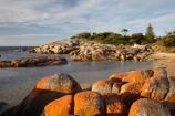 algae;Australasian;Australia;Australian;Bay-of-Fires;Binalong-Bay;coast;coastal;coastline;coastlines;coasts;East-Tasmania;Eastern-Tasmania;foreshore;fungi;geological;geology;Island-of-Tasmania;lichens;ocean;orange;orange-lichen;orange-lichens;orange-rock;orange-rock-lichen;orange-rock-lichens;orange-rocks;rock;rock-formation;rock-formations;rock-outcrop;rock-outcrops;rocks;sea;shore;shoreline;shorelines;shores;State-of-Tasmania;stone;Tas;Tasmania;water