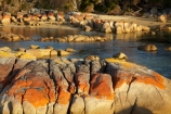 algae;Australasian;Australia;Australian;Bay-of-Fires;beach;beaches;Binalong-Bay;coast;coastal;coastline;coastlines;coasts;East-Tasmania;Eastern-Tasmania;foreshore;fungi;geological;geology;Island-of-Tasmania;lichens;ocean;orange;orange-lichen;orange-lichens;orange-rock;orange-rock-lichen;orange-rock-lichens;orange-rocks;rock;rock-formation;rock-formations;rock-outcrop;rock-outcrops;rocks;sand;sandy;sea;shore;shoreline;shorelines;shores;State-of-Tasmania;stone;Tas;Tasmania;water