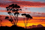 Australasian;Australia;Australian;Bay-of-Fires;Binalong-Bay;cloud;clouds;coast;coastal;coastline;coastlines;coasts;dusk;East-Tasmania;Eastern-Tasmania;eucalypt;eucalypts;eucalyptus;eucalytis;evening;foreshore;gum;gum-tree;gum-trees;gums;Island-of-Tasmania;nightfall;ocean;orange;sea;shore;shoreline;shorelines;shores;sky;slies;State-of-Tasmania;sunset;sunsets;Tas;Tasmania;tree;trees;twilight;water
