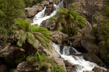 Australasian;Australia;Australian;cascade;cascades;creek;creeks;East-Tasmania;Eastern-Tasmania;falls;fern;ferns;frond;fronds;Island-of-Tasmania;natural;nature;plant;plants;Saint-Columba-Falls-State-Reserve;scene;scenic;St-Columba-Falls-State-Reserve;St.-Columba-Falls-State-Reserve;State-of-Tasmania;stream;streams;Tas;Tasmania;water;water-fall;water-falls;waterfall;waterfalls;wet