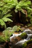 Australasian;Australia;Australian;beautiful;beauty;brook;brooks;bush;cascade;cascades;creek;creeks;cyathea;East-Tasmania;Eastern-Tasmania;endemic;falls;fern;ferns;flora;flow;forest;forestry;forests;frond;fronds;green;Island-of-Tasmania;lush;native;native-bush;natural;nature;outdoor;outdoors;plant;plants;ponga;pongas;punga;pungas;Saint-Columba-Falls-State-Reserve;scene;scenic;St-Columba-Falls-State-Reserve;St.-Columba-Falls-State-Reserve;State-of-Tasmania;stream;streams;Tas;Tasmania;tree;tree-fern;tree-ferns;trees;undergrowth;water;water-fall;water-falls;watercourse;waterfall;waterfalls;wet;wood;woods