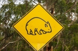 Australasian;Australia;Australian;Island-of-Tasmania;road-sign;road-signs;road_sign;road_signs;roads;roadsign;roadsigns;sign;signs;Southern-Tasmania;State-of-Tasmania;symbol;symbols;Tas;Tasman-Peninsula;Tasmania;warn;warning;warning-sign;warning-signs;wildlife;wombat;wombat-sign;wombat-signs;wombat-warning-sign;wombat-warning-signs;wombats;yellow-black;yellow-sign;yellow-signs
