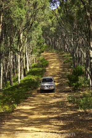 4wd;4wds;4wds;4x4;4x4s;4x4s;australasia;Australia;australian;beautiful;beauty;Bright;bush;countryside;dusty;endemic;eucalypt;eucalypts;eucalyptus;eucalytis;forest;forests;four-by-four;four-by-fours;four-wheel-drive;four-wheel-drives;gravel-road;gravel-roads;green;gum;gum-tree;gum-trees;gums;landcruiser;landcruisers;metal-road;metal-roads;metalled-road;metalled-roads;native;native-bush;natives;natural;nature;road;roads;rural;scene;scenic;suv;suvs;timber;toyota;toyotas;track;tracks;tree;tree-trunk;tree-trunks;trees;trunk;trunks;vehicle;vehicles;victoria;wood;woods