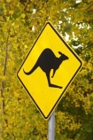 australasia;Australia;australian;autumn;autumn-colour;autumn-colours;autumnal;autumninal;Bright;color;colors;colour;colours;deciduous;fall;fall-color;fall-colors;foliage;forest;forests;kangaroo;Kangaroo-Warning-Sign;kangaroos;leaf;leaves;natural;nature;Road;road-sign;road-signs;road_sign;road_signs;roads;roadsign;roadsigns;sign;signs;symbol;symbols;tranportation;transport;travel;tree;trees;Victoria;warn;yellow