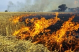 agricultural;agriculture;ash;australasia;Australia;australian;burn;burn-off;burn-offs;burn_off;burn_offs;burned;burning;burns;burnt;country;countryside;crop;crops;cultivation;farm;farming;farmland;farms;field;fields;fire;fires;flame;flames;grass_fire;grass_fires;grassfire;grassfires;heat;horticulture;hot;meadow;meadows;paddock;paddocks;pasture;pastures;polute;polutes;polution;rural;smoke;smokey;Stubble-Burnoff;Victoria;Wangaratta