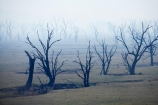 air-pollution;air-polutants;air-quality;airshed;airsheds;atmosphere;Australia;bad-air-quality;blackened-tree;blackened-trees;burnoff;burnoffs;burnt-tree;burnt-trees;bush-fire;bush-fires;bush_fire;bush_fires;bushfire;bushfires;carbon-footprint;dead-tree;dead-trees;drought;dry;Eastern-Victoria;emissions;emit;emsision;environment;global-warming;greenhouse-gas;greenhouse-gases;haze;hazey;hazy;high-pollution-day;high-pollution-days;Lake-Hume;Mitta-Arm;pollute;polluting;pollution;poor-air-quality;smog;smoggy;smoke;smokey;smoky;Tallangatta;tree;tree-stump;tree-stumps;tree-trunk;tree-trunks;trees;VIC;Victoria