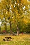 Australia;autuminal;autumn;autumn-colour;autumn-colours;autumnal;color;colors;colour;colours;deciduous;East-Victoria;Eastern-Victoria;fall;leaf;leaves;Mount-Beauty;Mt-Beauty;Mt.-Beauty;picnic-area;picnic-areas;picnic-table;picnic-tables;rest-area;rest-areas;season;seasonal;seasons;tree;trees;VIC;Victoria;yellow