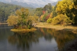 Alpine-N.P.;Alpine-National-Park;Alpine-NP;Australia;autuminal;autumn;autumn-colour;autumn-colours;autumnal;Bogong;Bogong-Village;calm;color;colors;colour;colours;deciduous;East-Victoria;eastern-Victoria;fall;Junction-Dam;lake;Lake-Guy;lakes;leaf;leaves;Mount-Beauty;Mt-Beauty;Mt.-Beauty;placid;quiet;reflection;reflections;season;seasonal;seasons;serene;smooth;still;tranquil;tree;trees;VIC;Victoria;Victorian-Alps;water;yellow