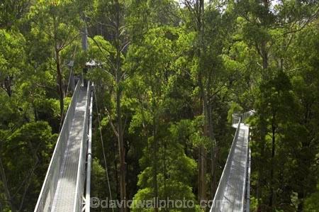 aerial-walkway;aerials-walkways;australasia;Australia;australian;bridge;bridges;bush;canopy;canopy-walk;ecotourism;engineering;eucalyptis;eucalypts;forest;forest-canopy;forests;galvanised;galvanized;great-ocean-road;gum;gums;high;high-up;lush;luxuriant;metal;native-bush;native-forest;native-forests;natural;nature;Otway-Fly;otway-range;Otway-Ranges;plant;plants;rain-forest;rain-forests;rain_forests;rainforest;rainforest-canopy;rainforest-walk;rainforests;steel;structure;structures;tree;Tree-Top-Walk;trees;vegetation;verdant;vertigo;Victoria;walkway;walkways