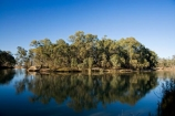 Australasian;Australia;Australian;calm;eucalypt;eucalypts;eucalyptus;eucalytis;gum;gum-tree;gum-trees;gums;Murray-River;N.S.W.;New-South-Wales;NSW;placid;quiet;reflection;reflections;river;rivers;serene;smooth;still;Swan-Hill;tranquil;tree;trees;Vic;Victoria;water