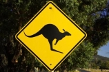 Ararat;australasia;Australia;australian;black;forest;forests;kangaroo;Kangaroo-Warning-Sign;kangaroos;natural;nature;Road;road-sign;road-signs;road_sign;road_signs;roads;roadsign;roadsigns;sign;signs;symbol;symbols;tranportation;transport;travel;Victoria;warn;yellow