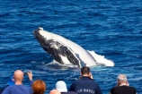 Animal;Animals;australia;australian;big;breach;breaches;breaching;Cetacean;Cetaceans;Coast;fin;fins;flipper;flippers;giant;gigantic;harvey;head;heads;hervey-bay;huge;humpback;Humpback-Whale;humpbacks;jump;jumping;Marine-life;Marine-mammal;Marine-mammals;Megaptera-novaeangliae;Nature;ocean;oceans;pacific-ocean;Power;queensland;Sea;Sea-mammal;Sea-mammals;seas;spectacular;splash;splashes;splashing;tasman-sea;Water;Whale;whale-watch;whale-watching;whale_watch;whale_watching;Whales