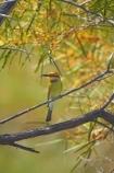 Wildlife - Australia