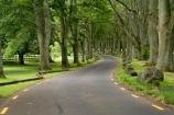 Auckland;Avenue;Avenues;bend;bends;corner;corners;Cornwall-Park;N.I.;N.Z.;New-Zealand;NI;North-Island;NZ;Oak;Oak-tree;Oak-trees;Oaks;One-Tree-Hill;road;roads;travel;tree-trunk;tree-trunks;trunk;trunks;Twin-Oaks-Drive