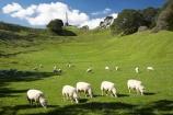 agricultural;agriculture;auckland;cornwall-park;farm;farming;farmland;farms;field;fields;grass;Maungakiekie;meadow;meadows;N.I.;n.z.;new-zealand;NI;north-island;nz;obelisk;one-tree-hill;one-tree-hill-domain;paddock;paddocks;pasture;pastures;sheep;stock;volcano;volcanoes