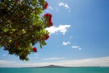 Auckland;flower;flowers;metrosideros-excelsa;Mission-Bay;N.I.;N.Z.;native;native-plant;native-plants;New-Zealand;NI;North-Is;North-Is.;North-Island;NZ;plant;plants;pohutakawa;pohutakawas;pohutukawa;pohutukawa-flower;pohutukawa-flowers;pohutukawa-tree;pohutukawa-trees;pohutukawas;Rangitoto-Is;Rangitoto-Island;summer;tree;trees