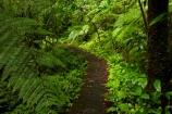 Auckland;bush-native-bush;forest;green;Hunua-Falls-Loop-Track;Hunua-Falls-Loop-Walk;Hunua-Falls-Regional-Park;Hunua-Ranges;Hunua-Ranges-Regional-Park;lush;N.Z.;native-forest;New-Zealand;New-Zealand-bush;North-Is.;North-Island;Nth-Is;NZ;track;tracks;walking-track;walking-tracks