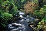 bush;Catlins;creek;long-exposure;long_exposure;McLean-Falls;n.z.;natural;nature;New-Zealand;nz;overgrown;river-bed;rivers;South-Island;Southland;Tautuku-River;vegetation