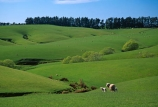 agriculture;Clinton;farm;farming;Farmland;farms;field;fields;grass;green;lamb;lambs;lush;meadow;meadows;n.z.;New-Zealand;nz;paddock;paddocks;pasture;pastures;plain;plains;rural;sheep;South-Island;South-Otago;Southland;spring;verdant