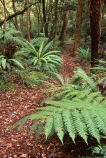 Akatore-Forst;Catlins;fern;forest;frond;fronds;green;icon;icons;n.z.;native;nature;New-Zealand;nz;Otago;radiate;South-Island;Southern-Scenic-Route;symbol;symbols;Taieri-Mouth;Tree-Fern;Tree-Ferns