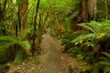 beautiful;beauty;bush;Catlins;Catlins-District;Catlins-Region;cyathea;endemic;fern;ferns;forest;forests;frond;fronds;green;hiking-track;hiking-tracks;Matai-Falls;N.Z.;native;native-bush;natives;natural;nature;New-Zealand;NZ;Otago;plant;plants;rain-forest;rain-forests;rain_forest;rain_forests;rainforest;rainforests;S.I.;scene;scenic;SI;South-Is;South-Island;South-Otago;Sth-Is;Sth-Otago;tree;trees;walking-track;walking-tracks;woods