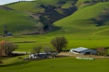 agricultural;agriculture;Clutha-District;country;countryside;farm;Farm-Building;Farm-Buildings;Farm-Shed;Farm-Sheds;farming;farmland;farms;field;fields;grass;grassy;green;green-grass;meadow;meadows;N.Z.;New-Zealand;Otago;paddock;paddocks;pasture;pastures;rural;S.I.;Shearing-Shed;Shearing-Sheds;Sheep-Shed;Sheep-Sheds;SI;South-Is;South-Island;South-Otago;Sth-Is;Waitahuna;Wool-Shed;Wool-Sheds;woolshed;woolsheds