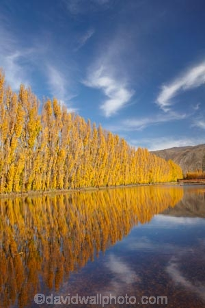 autuminal;autumn;autumn-colour;autumn-colours;autumnal;calm;Central-Otago;color;colors;colour;colours;Cromwell;dam;dams;deciduous;fall;gold;golden;irrigation-dam;irrigation-dams;irrigation-pond;irrigation-ponds;leaf;leaves;N.Z.;New-Zealand;NZ;orchard;orchards;Otago;placid;pond-ponds;poplar-tree;Poplar-trees;quiet;reflection;reflections;Ripponvale;row;rows;S.I.;season;seasonal;seasons;serene;SI;smooth;South-Is;South-Island;still;tranquil;tree;trees;water;yellow