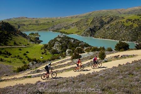 bicycle;bicycles;bike;bike-track;bike-tracks;bike-trail;bike-trails;bikes;Central-Otago;child;children;cycle;cycle-track;cycle-tracks;cycle-trail;cycle-trails;cycler;cyclers;cycles;cyclist;cyclists;families;family;hairpin-bend;hairpin-bends;hairpin-corner;hairpin-corners;lake;Lake-Roxburgh;lakes;mountain-bike;mountain-biker;mountain-bikers;mountain-bikes;mtn-bike;mtn-biker;mtn-bikers;mtn-bikes;N.Z.;New-Zealand;NZ;Otago;people;person;push-bike;push-bikes;push_bike;push_bikes;pushbike;pushbikes;Roxburgh;Roxburgh-Cycle-Track;Roxburgh-Cycle-Trail;Roxburgh-Gorge;Roxburgh-Gorge-Cycle-and-Walking-Trail;Roxburgh-Gorge-Cycle-Track;Roxburgh-Gorge-Cycle-Trail;Roxburgh-Gorge-Track;Roxburgh-Gorge-Trail;Roxburgh-Gorge-Walking-and-Cycle-Trail;S.I.;season;seasonal;seasons;SI;South-Is;South-Island;spring;spring-time;steep;Sth-is;switchback;switchback-road;switchback-roads;switchbacks;thyme;thyme-in-flower;tourism;tourist;tourists;violet;wild-thyme;zig-zag;zig-zag-road;zig-zag-roads;zig-zags;zig_zag;zig_zag-road;zig_zag-roads;zig_zags;zigzag;zigzag-road;zigzag-roads;zigzags