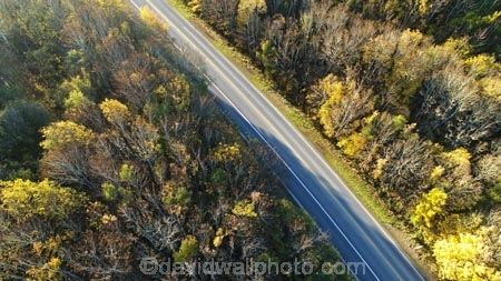 aerial;Aerial-drone;Aerial-drones;aerial-image;aerial-images;aerial-photo;aerial-photograph;aerial-photographs;aerial-photography;aerial-photos;aerial-view;aerial-views;aerials;autuminal;autumn;autumn-colour;autumn-colours;autumnal;bend;bends;Central-Otago;color;colors;colour;colours;corner;corners;curve;curves;deciduous;driving;Drone;Drones;fall;forest;forests;gold;golden;highway;highways;leaf;leaves;Manuka-Gorge;N.Z.;New-Zealand;NZ;open-road;open-roads;Otago;Quadcopter-aerial;Quadcopters-aerials;road;road-trip;roads;s-bend;s-bends;S.H.8;S.I.;season;seasonal;seasons;SH8;SI;South-Is;South-Island;State-Highway-8;State-Highway-Eight;Sth-Is;sycamore-tree;sycamore-trees;transport;transportation;tree;trees;trip;U.A.V.-aerial;UAV-aerials;yellow