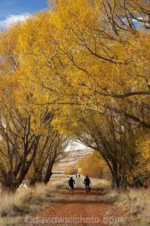 adventure;autuminal;autumn;autumn-colour;autumn-colours;autumnal;avenue;avenues;bicycle;bicycles;bike;biker;bikes;Central-Otago;Central-Otago-Rail-Trail;color;colors;colour;colours;cycle;cycle-track;cycler;cyclers;cycles;cycling-track;cyclist;cyclists;deciduous;fall;golden;Ida-Valley;leaf;leaves;Maniototo;mountain-bike;mountain-bike-track;mountain-biker;mountain-bikers;mountain-bikes;mtn-bike;mtn-biker;mtn-bikers;mtn-bikes;N.Z.;New-Zealand;NZ;Otago;Otago-Central-Rail-Trail;Oturehua;push-bike;push-bikes;push_bike;push_bikes;pushbike;pushbikes;rail-trail;rail-trails;S.I.;scenic;season;seasonal;seasons;SI;South-Island;sports;tourism;track;tracks;tree;trees;willow;willow-tree;willow-trees;willows;yellow;mountain;biking;cycling;