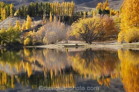 autuminal;autumn;autumn-colour;autumn-colours;autumnal;Bannockburn;Bannockburn-Inlet;calm;Central-Otago;color;colors;colour;colours;deciduous;fall;golden;Kawarau-Arm;lake;Lake-Dunstan;lakes;N.Z.;New-Zealand;NZ;Otago;Picnic-Area;Picnic-Areas;Picnic-Ground;Picnic-Grounds;placid;poplar;poplar-tree;poplar-trees;poplars;quiet;reflection;reflections;Rest-Area;Rest-Areas;S.I.;season;seasonal;seasons;serene;SI;smooth;South-Is.;South-Island;still;tranquil;tree;trees;water;willow;willow-tree;willow-trees;willows;yellow