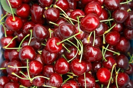 Central-Otago;Cherries;cherry;Cromwell;crop;crops;food;fresh;fruit;fruits;N.Z.;New-Zealand;NZ;orchard;orchards;pick-your-own;pick_your_own;produce;red;ripe;Ripponvale;S.I.;SI;South-Island;stone-fruit;stone_fruit;summer-fruit