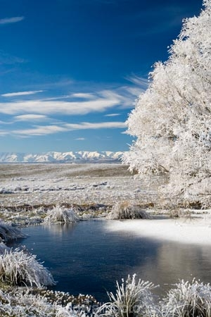 agricultural;agriculture;beautiful;calm;calmness;Central-Otago;Central-Otago-Rail-Trail;clean;clear;cold;Coldness;Color;Colour;country;countryside;Daytime;Exterior;farm;farming;farmland;farms;field;fields;freeze;freezing;freezing-fog;frost;Frosted;frosty;frozen-pond;frozen-ponds;Hawkdun-Range;Hawkdun-Ranges;high-country;hoar-frost;hoar-frosts;Hoarfrost;hoarfrosts;ice;ice-crystals;icy;idyllic;Landscape;Landscapes;Maniototo;meadow;meadows;N.Z.;natural;Nature;new-zealand;NZ;Omakau;Otago;Otago-Central-Rail-Trail;Outdoor;Outdoors;Outside;paddock;paddocks;pasture;pastures;peaceful;Peacefulness;phenomena;phenomenon;pond;ponds;pool;pools;pure;Quiet;Quietness;rail-trail;rail-trails;reservoir;reservoirs;rime;rime-ice;rural;S.I.;Scenic;Scenics;Season;Seasons;SI;silence;south-island;spectacular;stunning;tranquil;tranquility;tree;trees;view;water;weather;White;willow;willow-tree;willow-trees;willows;winter;Wintertime;wintery;wintry